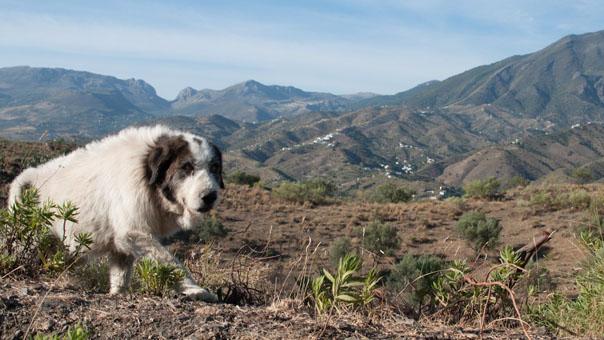 Местная животина на фоне перевала Lions Gate