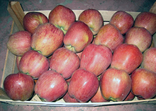 Хранение зимних фруктов