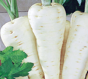 Белый корень