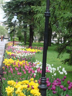Обновление цветочной красотой