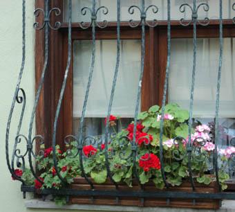 Город — цветущий сад