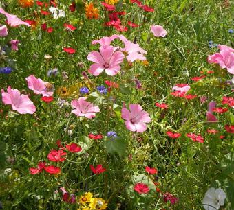 Буйство цветов и красок