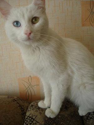 Кот, которому суждено было умереть