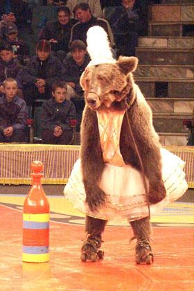 Ставрополь покоряют звезды арены —  Топтыжка, Торопыжка и другие артисты