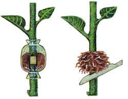 Сфагнум – уникальный мох