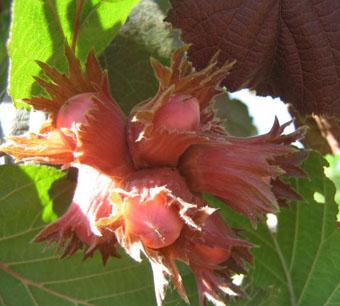 Лесные плоды на даче