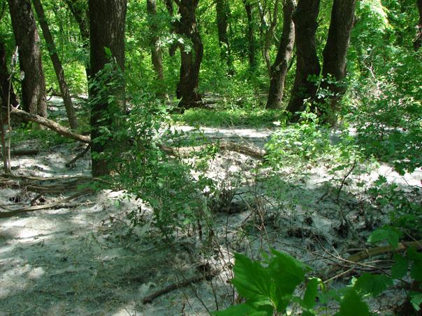 В лесу у Невинного мыса