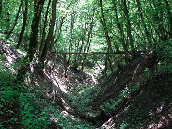 В Дунькином лесу