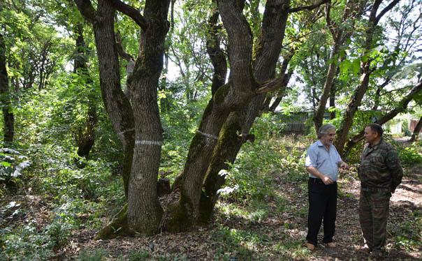 Рабочая группа по «Русскому лесу» побывала на месте