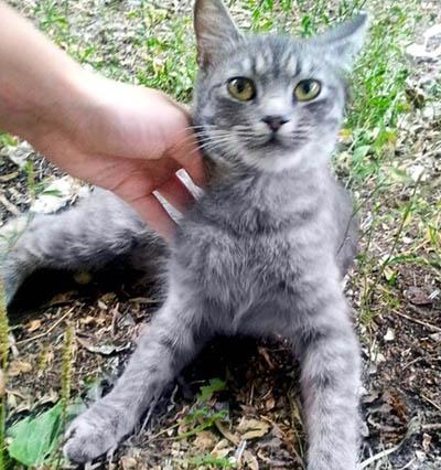 Кошка Дымка. Лучший друг