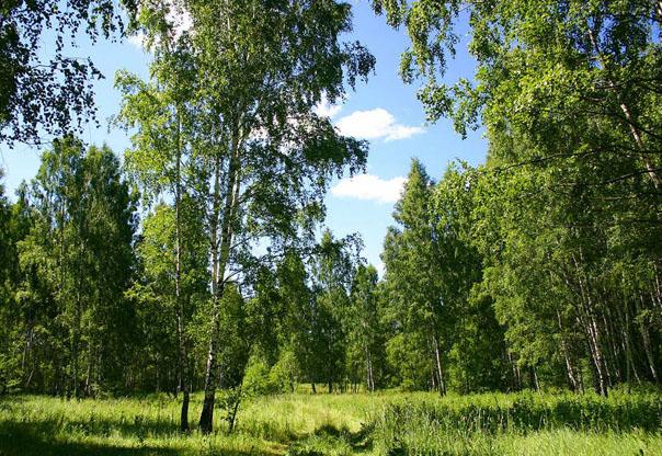 Лес - это главное богатство России