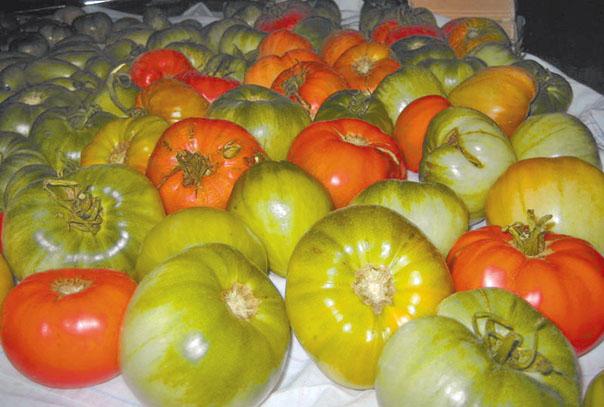 Поздние овощи: собрать и сохранить
