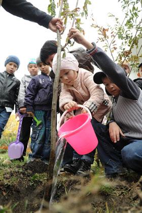 Ставрополь стал богаче  почти на 10 тысяч  деревьев