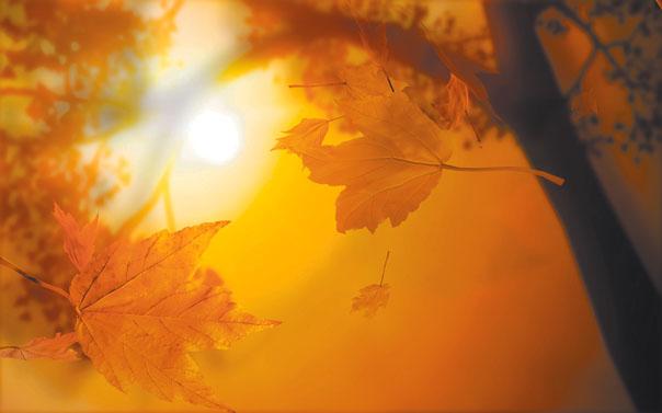 «Что такое осень – это...