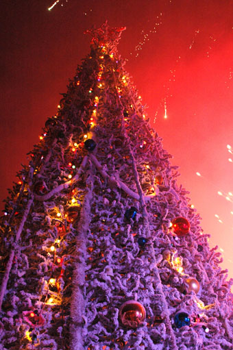 В Ставрополе зажглись огни главной городской ёлки