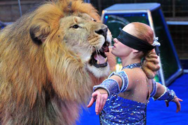 «В созвездии льва»