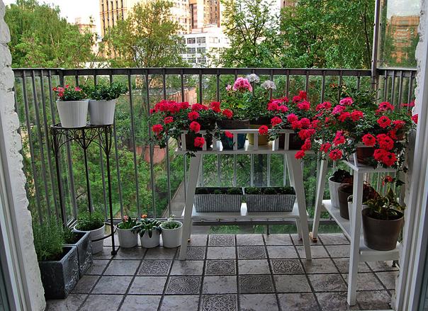 «Город – цветущий сад-2013»