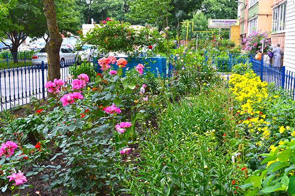 Город - цветущий сад! Номинация «Цветущий двор (палисадник)» (видео)
