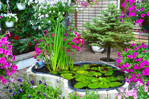 Город - цветущий сад. Выпуск 4 (видео)