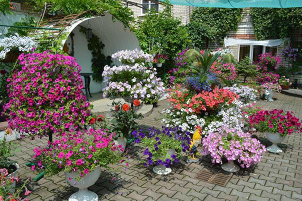 Город - цветущий сад. Итоги