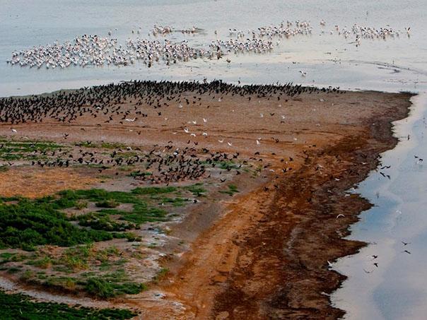 Озеро Маныч под особой охраной