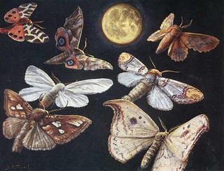 фото ночные бабочки