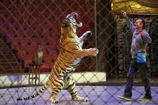 «Золотой сезон» собрал легенды российского цирка