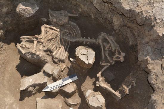 Древние погребения обнаружили в Ипатовском районе Ставрополья
