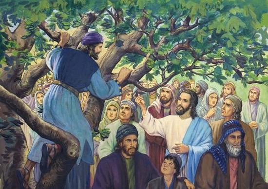 Отросток библейского дерева Закхея доставят вСтаврополь всубботу