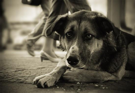 Каким построят крупнейший приют для бездомных животных под Кисловодском