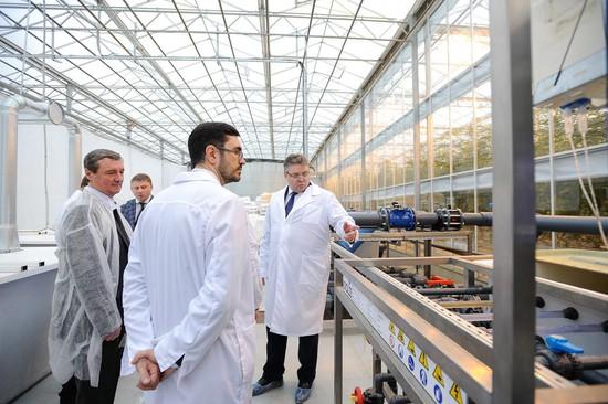 Губернатор Владимиров открыл крупный тепличный комплекс вКировском районе Ставрополья