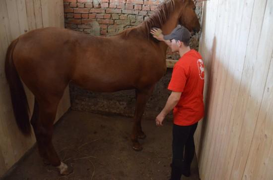 НаСтаврополье казаки завели микроблог коню