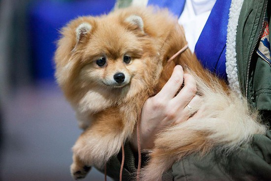 Собачий праздник состоится вСтаврополе 24декабря