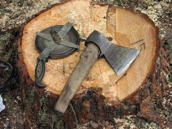 Дело завели на депутата мэрии Минвод заразрешение вырубить деревья